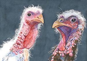 فراخوان رقابت هنر برای حیوانات NAVS 2019